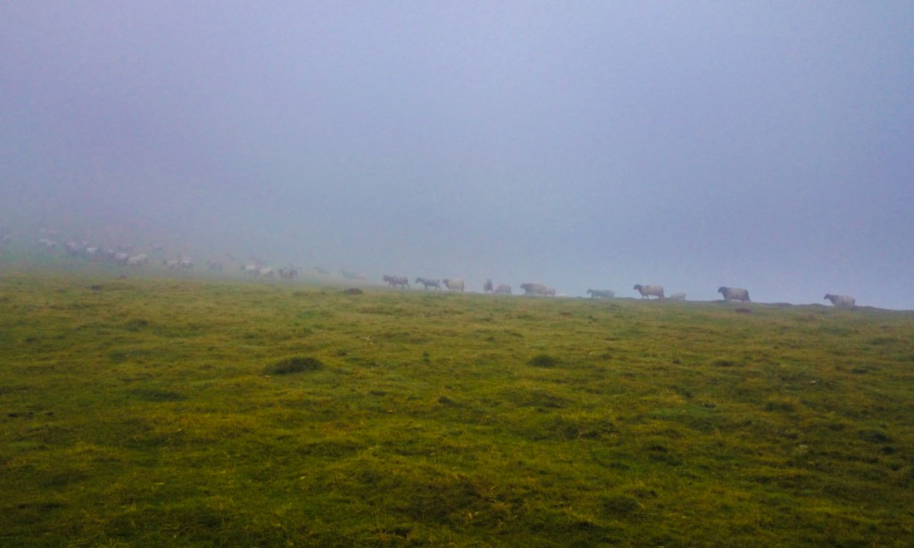 La niebla fue muy densa durante la primera etapa